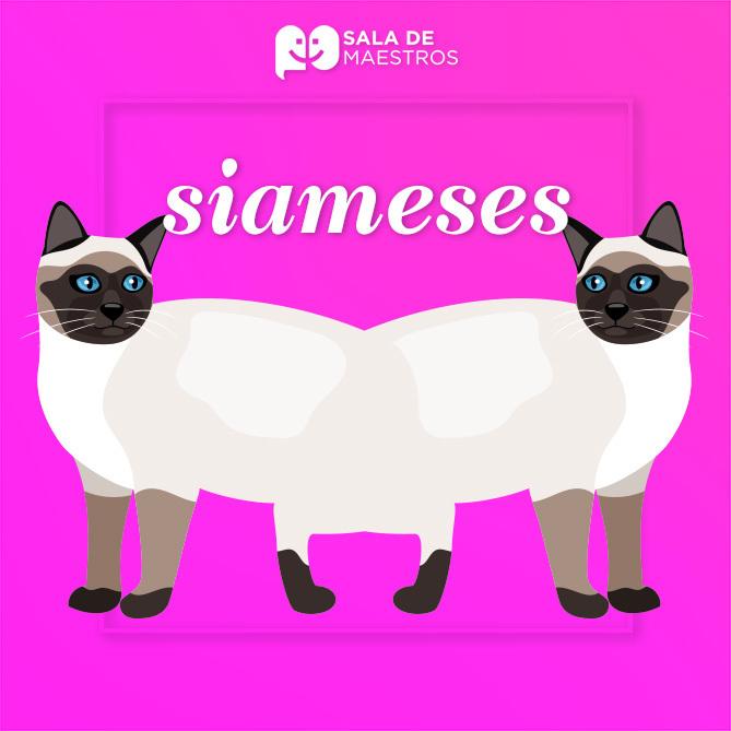 Gatos y gemelos: de dónde viene el término siamés